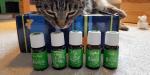 Xoco die Katze schnuppert an AnimalScents - ätherische Öle für Haustiere und Nutztiere